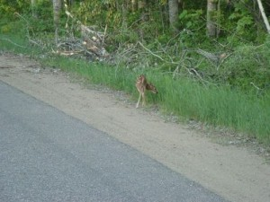 bambi02